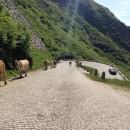St Gotthard Pass- A Cobbled Swiss Dream